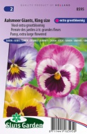 Pansy, Aalsmeer Giants, King size