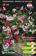 Geranium Ivy-leaved Summertime F1