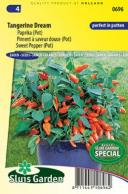 Sweet Pepper Tangerina Dream (pot)