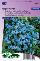 Forget-me-not (woodland) Indigo Blue