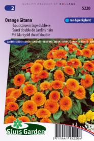 Calendula (Pot Marigold) Orange Gitana dwarf double
