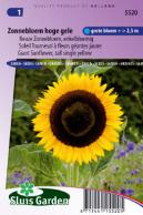 Sunflower tall single yellow