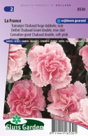 Carnation giant Chabaud double La France, soft-pink