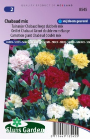 Carnation giant Chabaud double mix