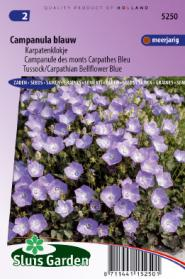 Campanule des monts Carpathes Bleu