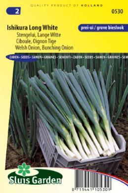 Ciboule ishikura long white oignon tige les vari tes d - Quand semer les oignons ...