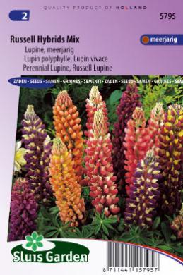 Lupin polyphylle vivace russell hybrids mix graines de fleurs vivaces produits sluis garden - Graine de lupin comestible ...