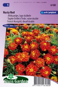 Marigold, French dwarf double Rusty Red