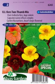 Nasturtium, Indian Cress dwarf sinlge Tom Thumb mix