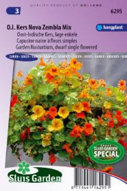 Nasturtium. Indian Cress dwarf single Nova Zembla mix