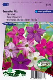 Siertabak Sensation mix (Nicotiana)