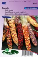 Ornamental Corn, Multicolor large varieties